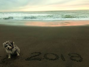 simple New Year Resolutions for you and your Dog