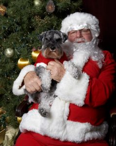 holiday tips for your dog