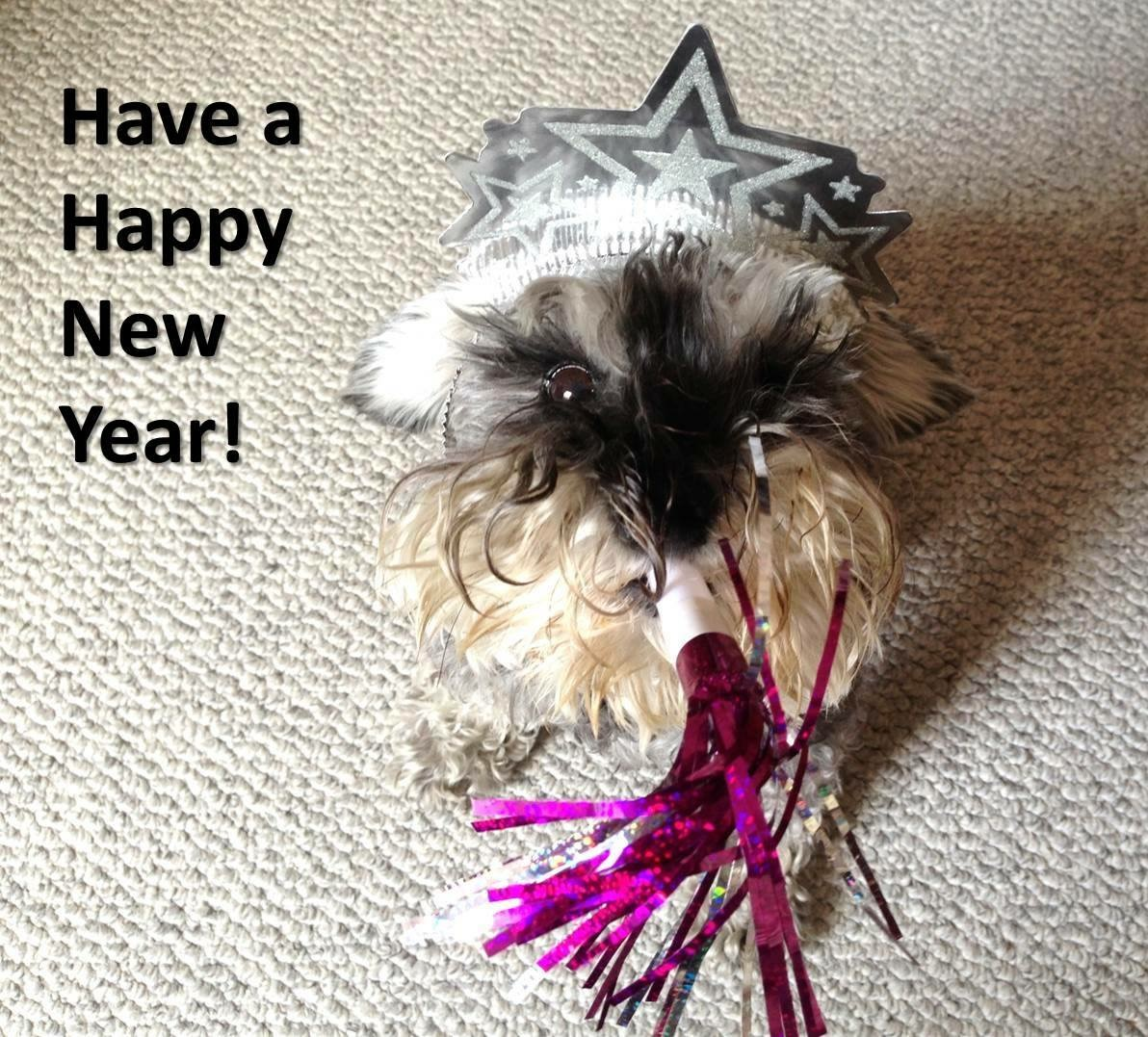 Simple New Year's Resolutions for You and Your Dog
