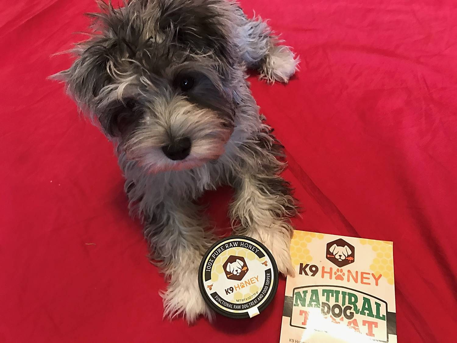 k9 honey for dogs