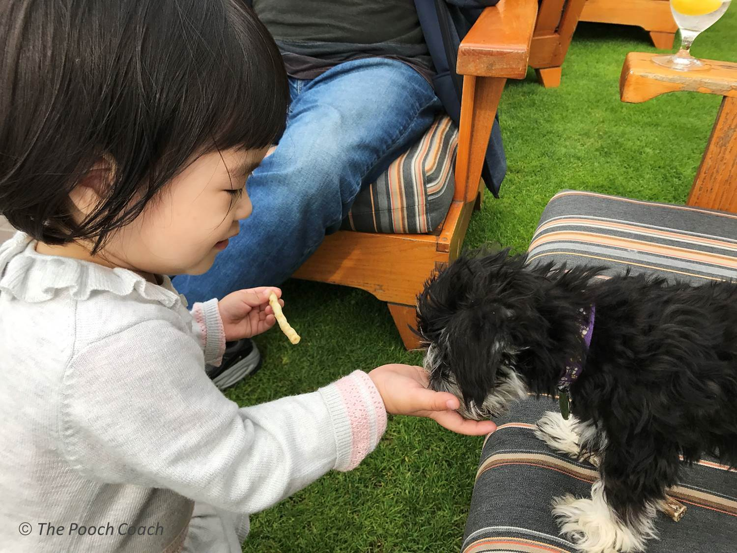 SOCIALIZING YOUR NEW PUPPY OR DOG