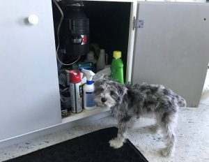 The most common household toxicities that occur in dogs