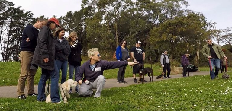 the pooch coach meetups