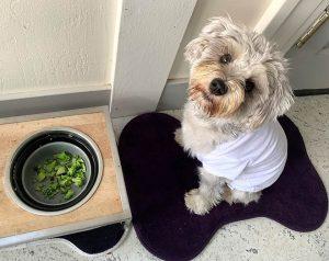 Healthy Food Helps Your Dog Heal