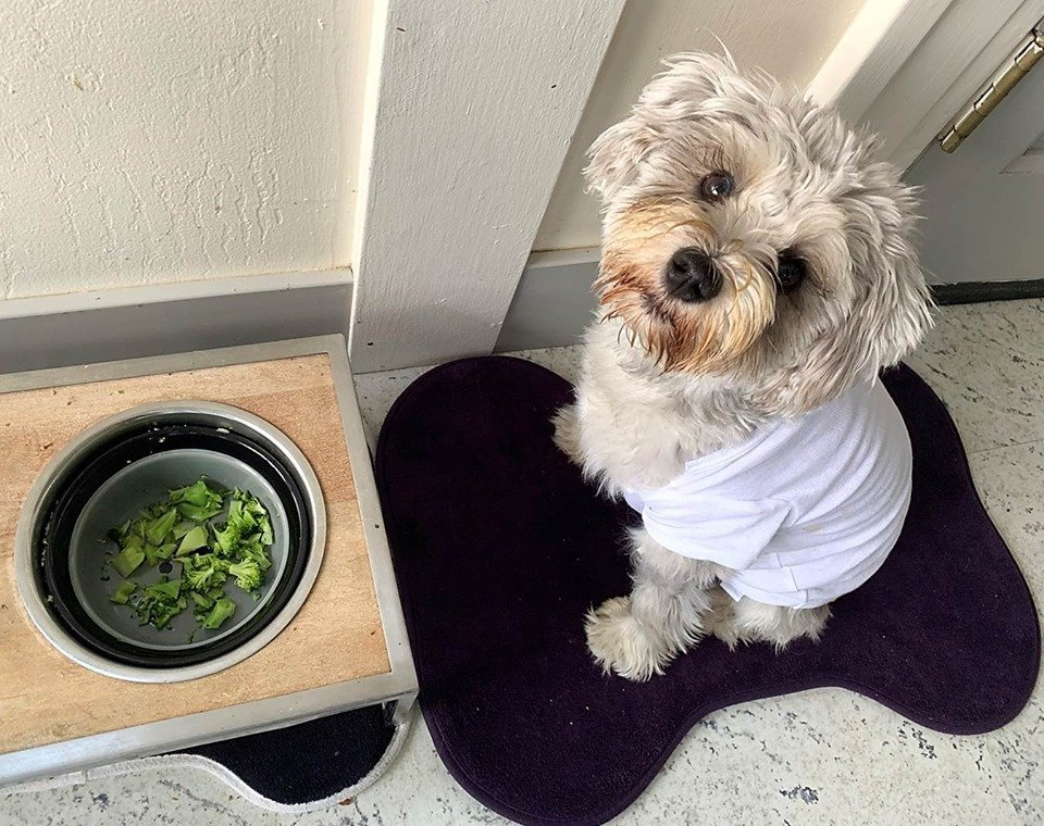 Healthy Food Helps Your Dog Heal