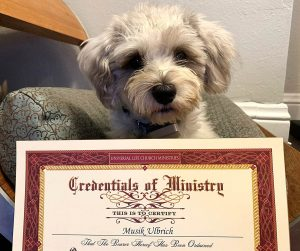 Musik SF Ordained Minister Dog