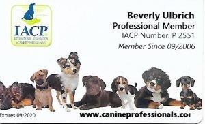 best san fracisco dog trainer (1)