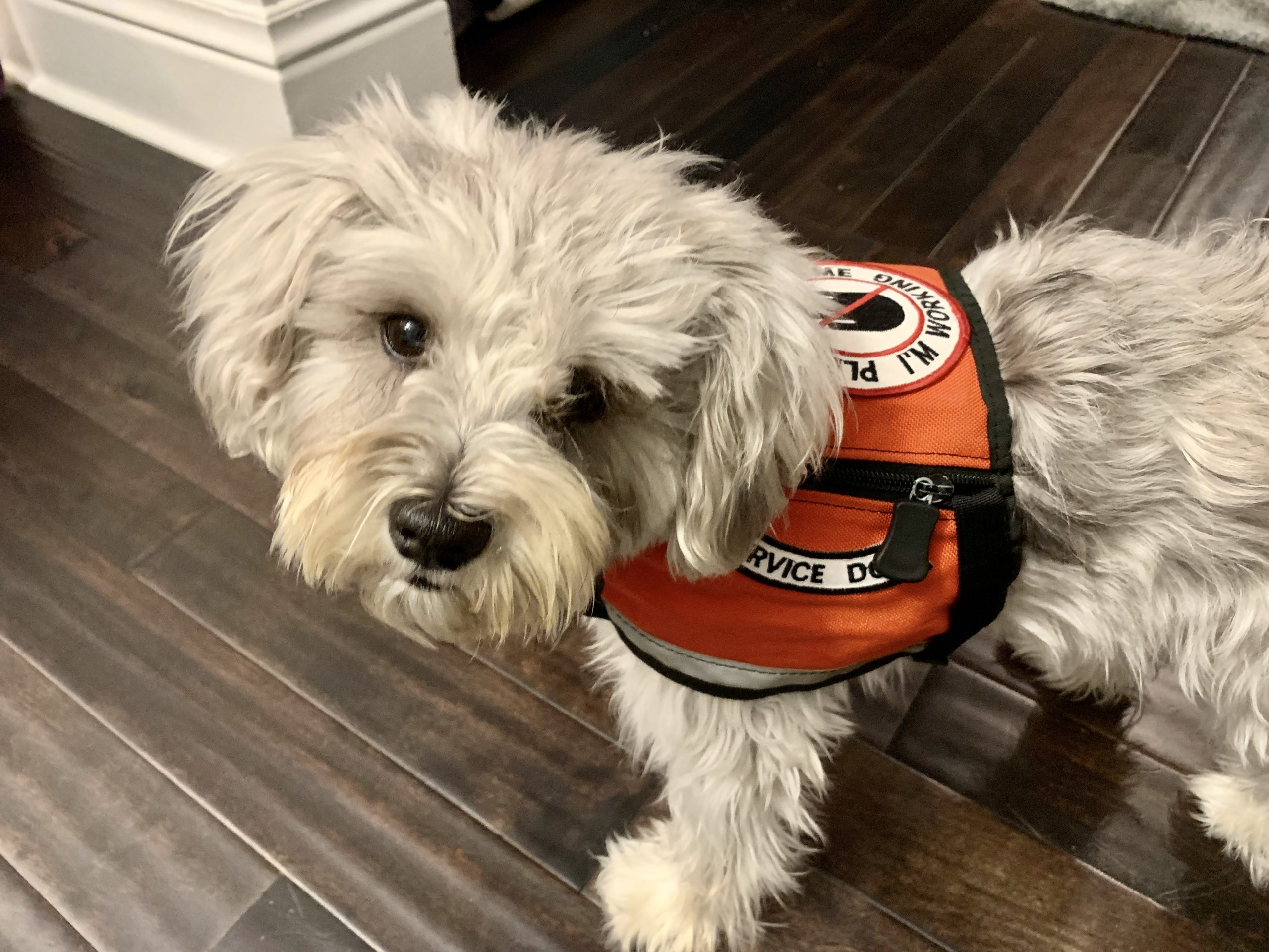 How Service Dogs Help With Epileptic Seizures The Pooch Coach