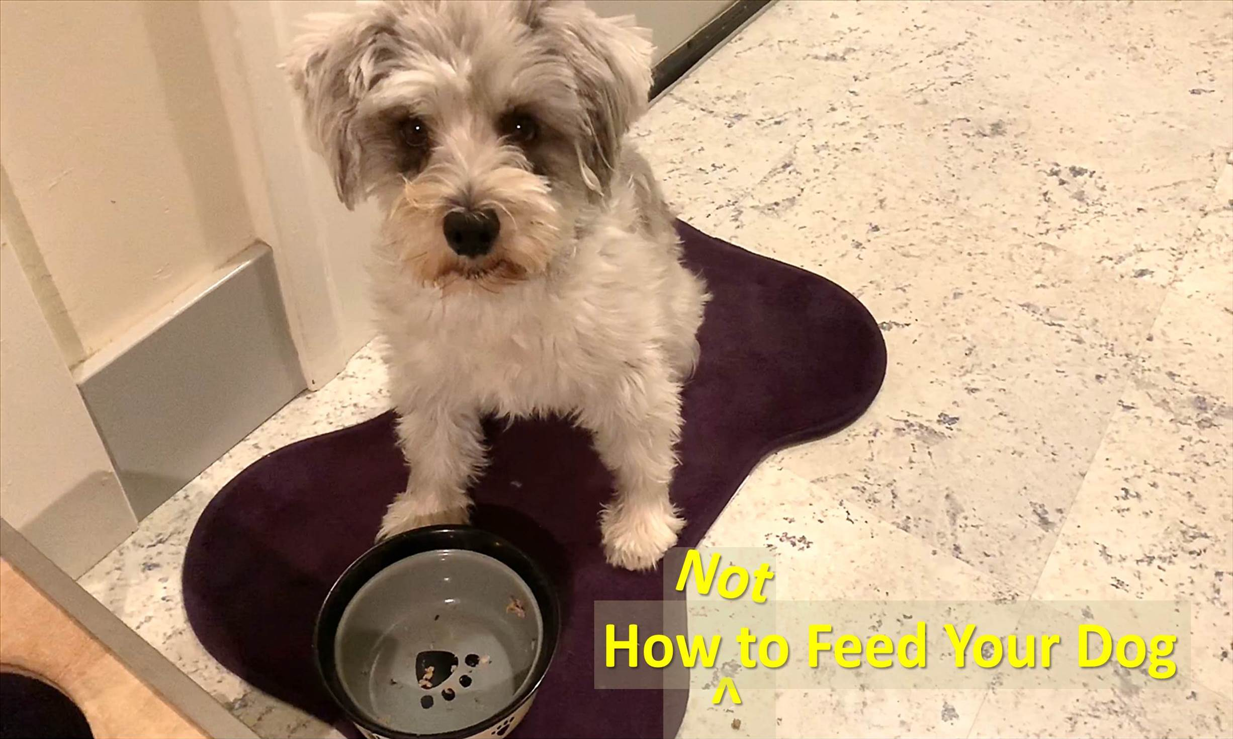 HOW TO FEED YOUR DOG