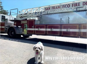 History of Dalmatians as Fire Dogs
