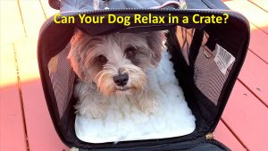 the importance of crate training