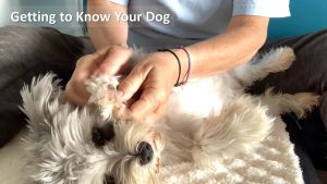 how to pet your dog