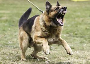 CALMING REACTIVE DOGS