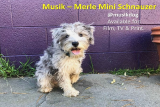 musik dog actor